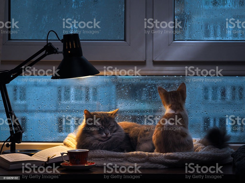 Cats in the window stock photo