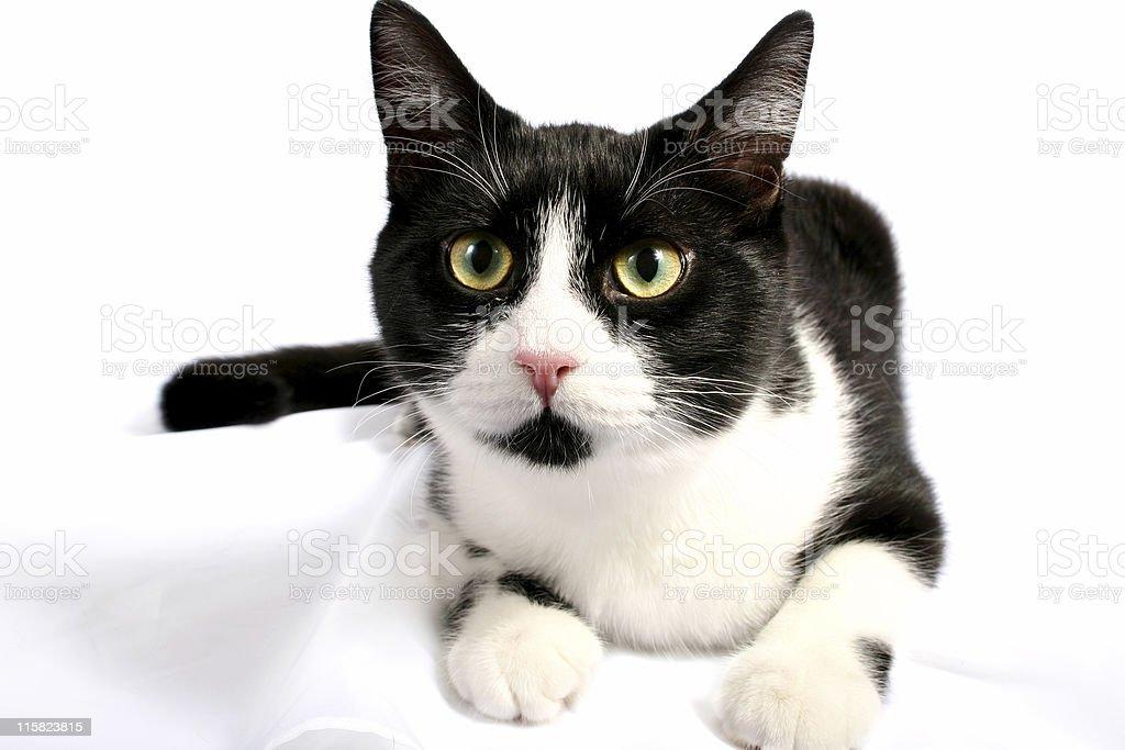 Cat's Life 02 royalty-free stock photo