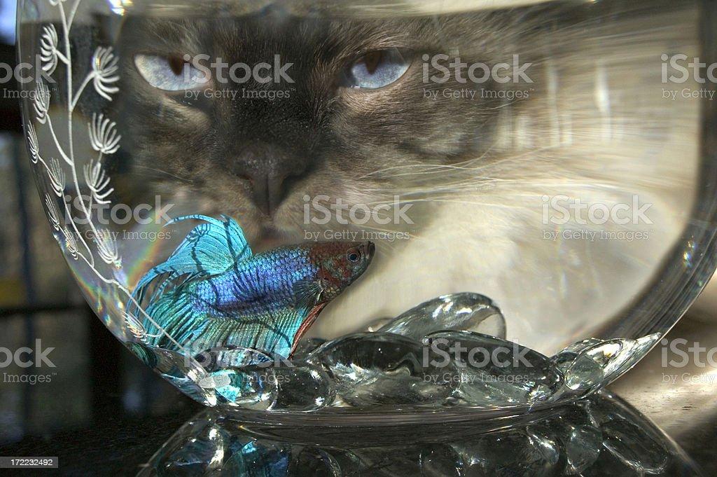 Cats Like Sea Food stock photo