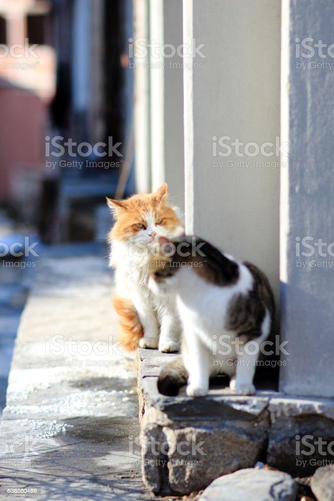 Cats love stock photo