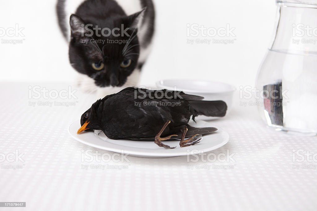 cat's lunch stock photo