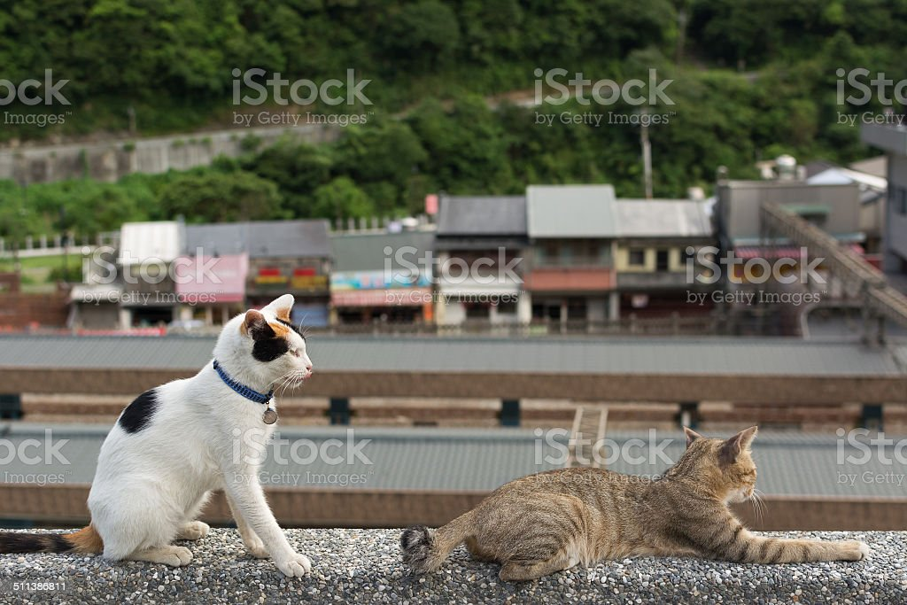 Cats lying on the wall. stock photo
