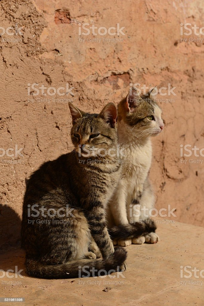 Cats, Marrakech, Morocco, Africa. stock photo