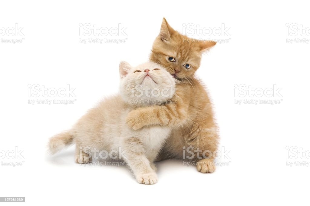 cats on ground stock photo