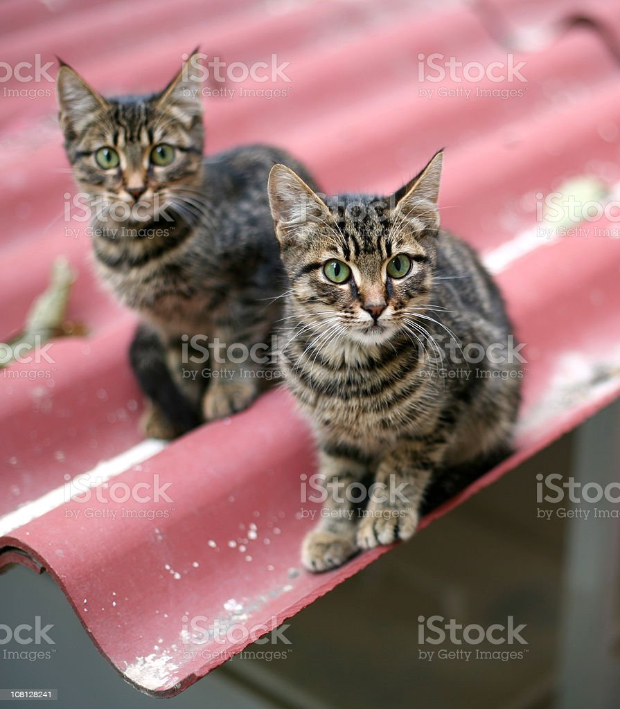 Cats on the roof royalty-free stock photo