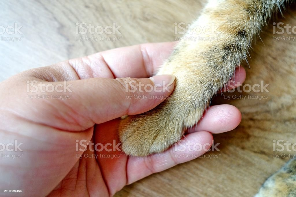 cat's paw and human hand stock photo