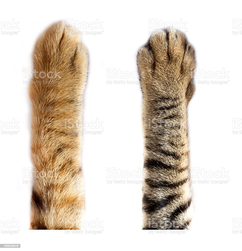 cats paw on white background stock photo
