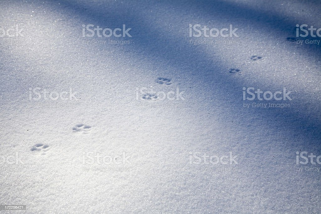 Cat's Paw Prints in Fresh White Snow stock photo