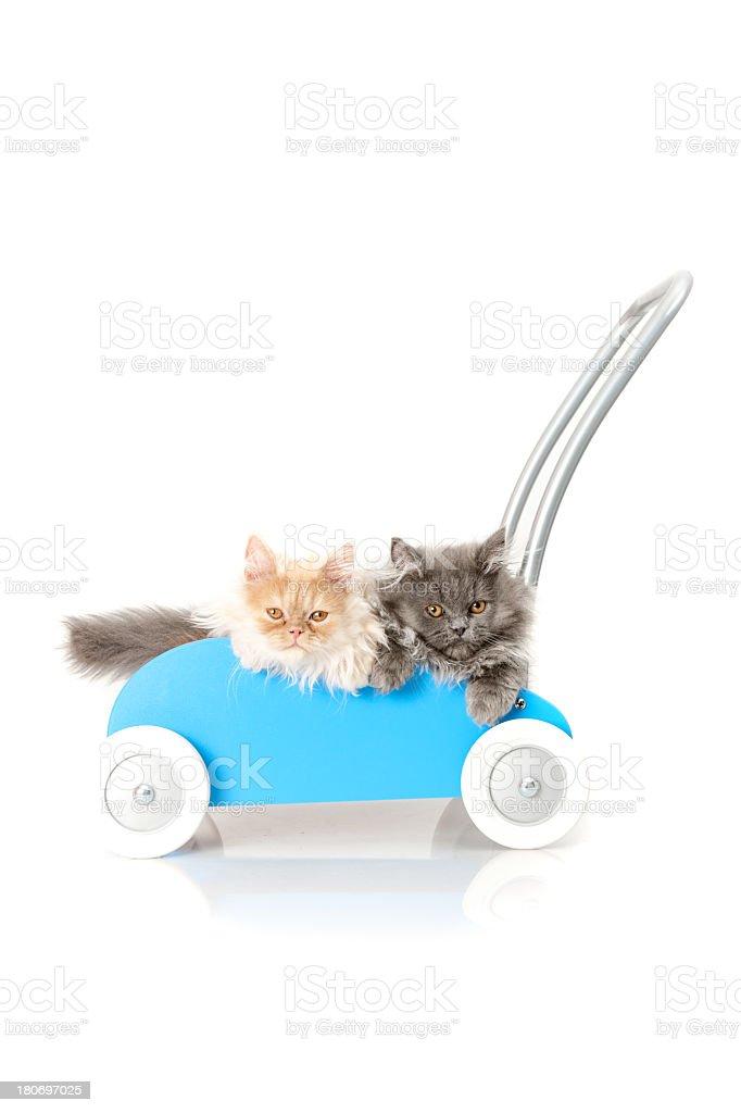 cats royalty-free stock photo