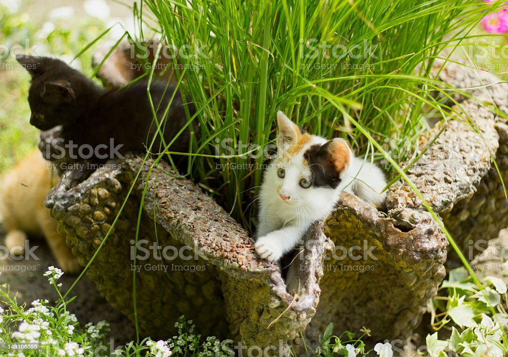 Cats playing in the garden. royalty-free stock photo