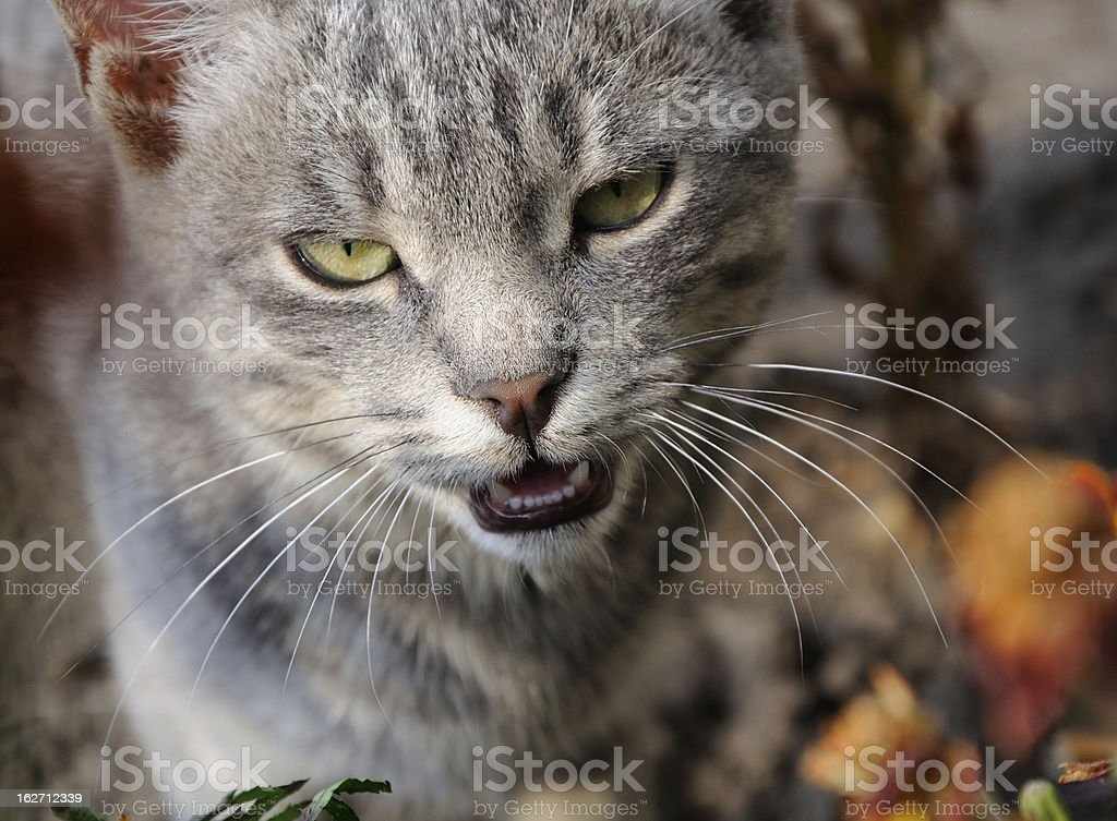 cat's portret royalty-free stock photo