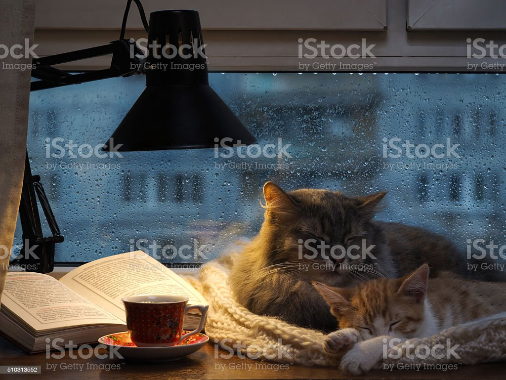 Cats sleeping in the window. stock photo