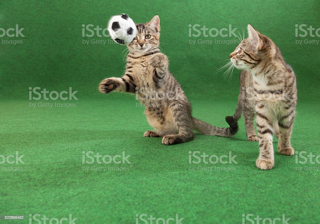 cats soccer game stock photo