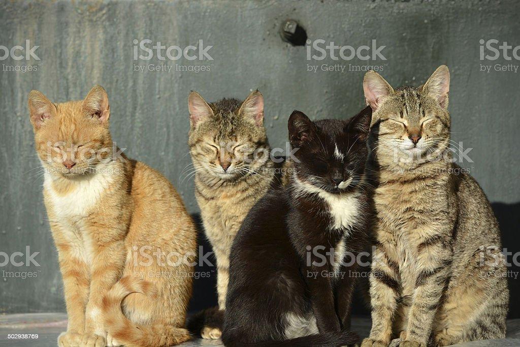 Cats Sunbathing royalty-free stock photo