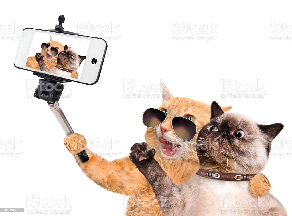 Cats taking a selfie with a smartphone stock photo