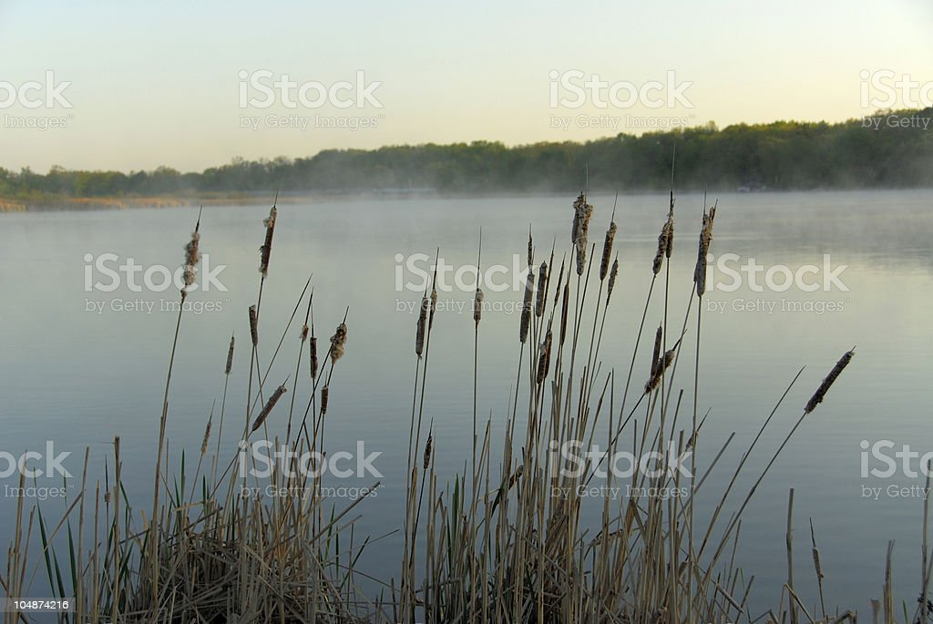 Cattail by a Lake royalty-free stock photo