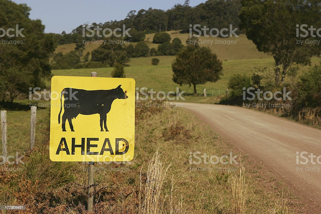 Cattle Ahead Sign royalty-free stock photo