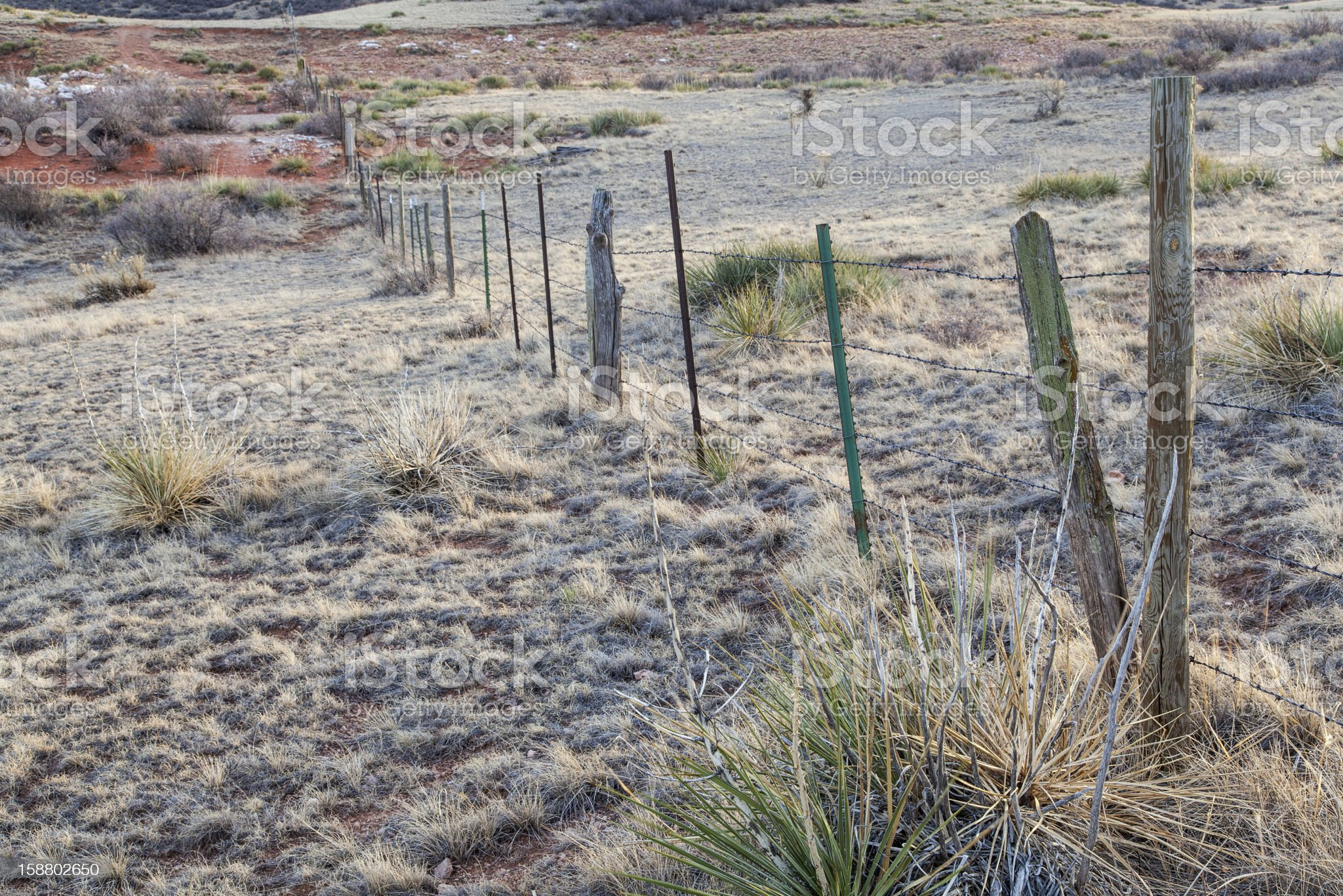 cattle barbed wire fence royalty-free stock photo