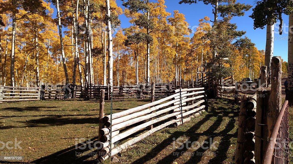 Cattle corral Cedar Mountain autumn colors among Aspen Trees Utah stock photo