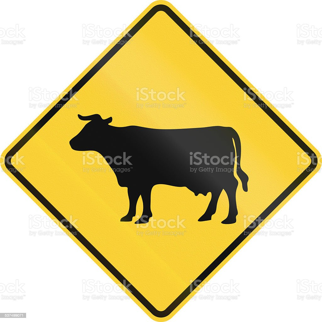 Cattle Crossing stock photo