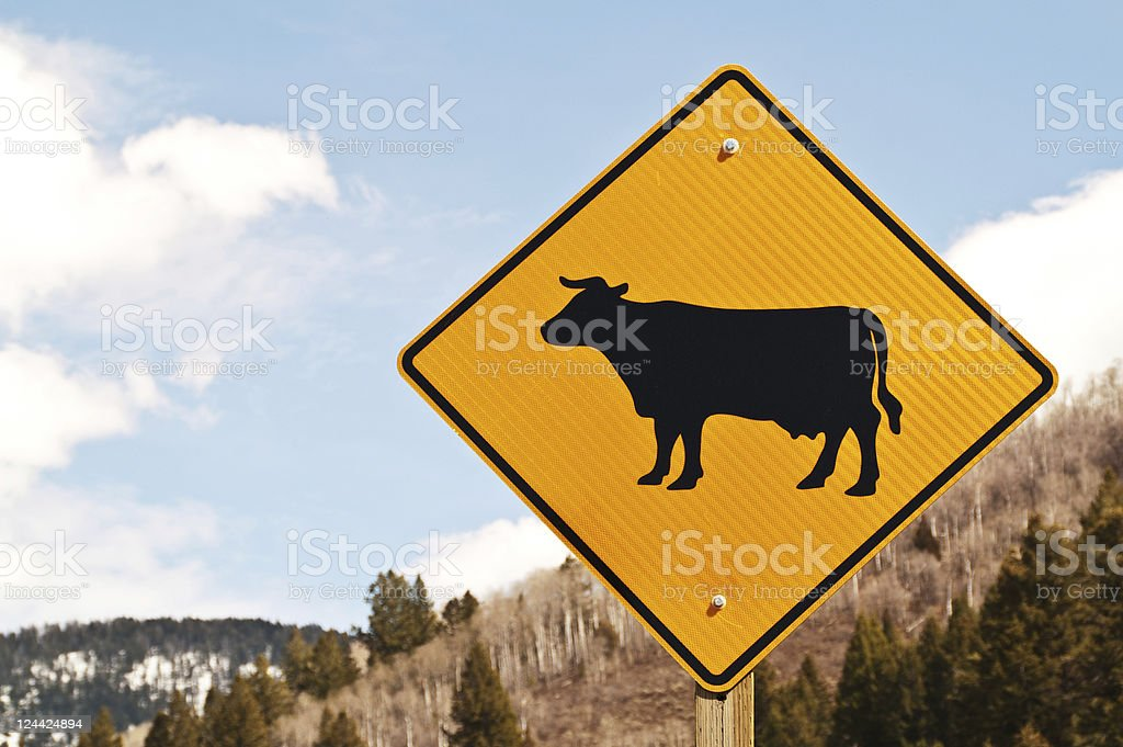 Cattle Crossing Sign stock photo