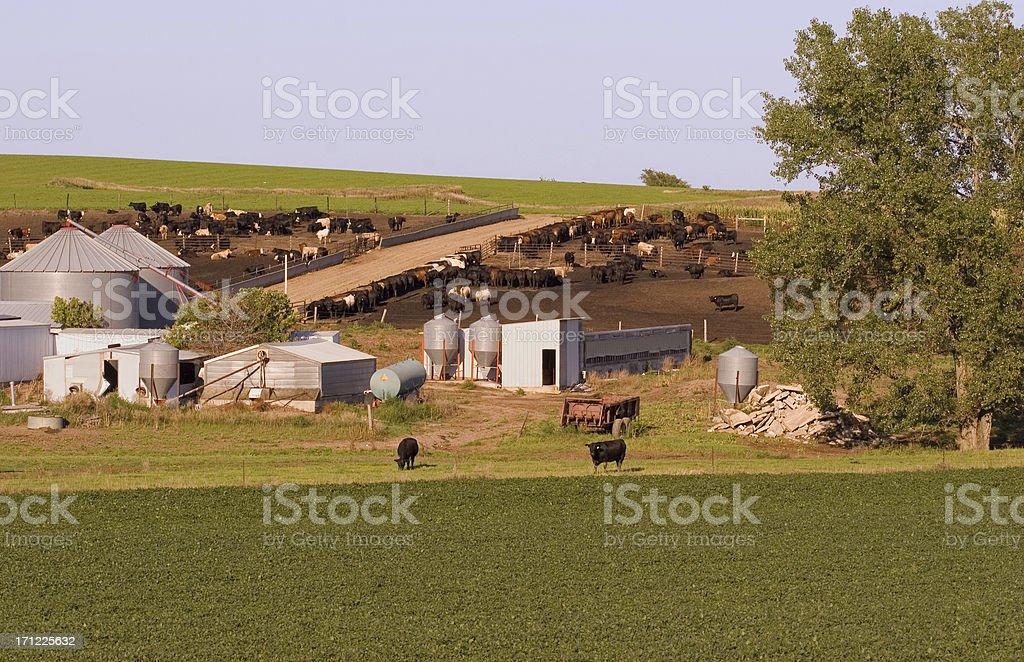 Cattle Farm royalty-free stock photo
