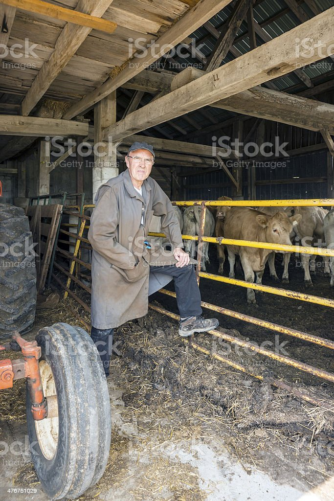 Cattle farmer in his barn royalty-free stock photo