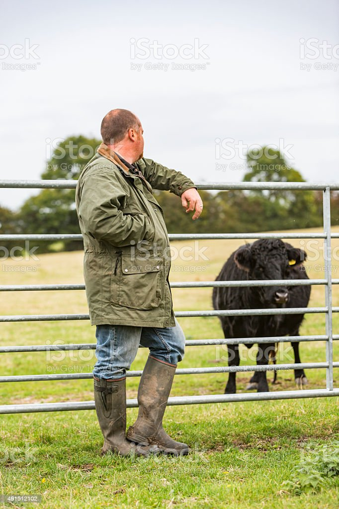 Cattle Farmer With Cow while Causally Leaning on a Gate stock photo