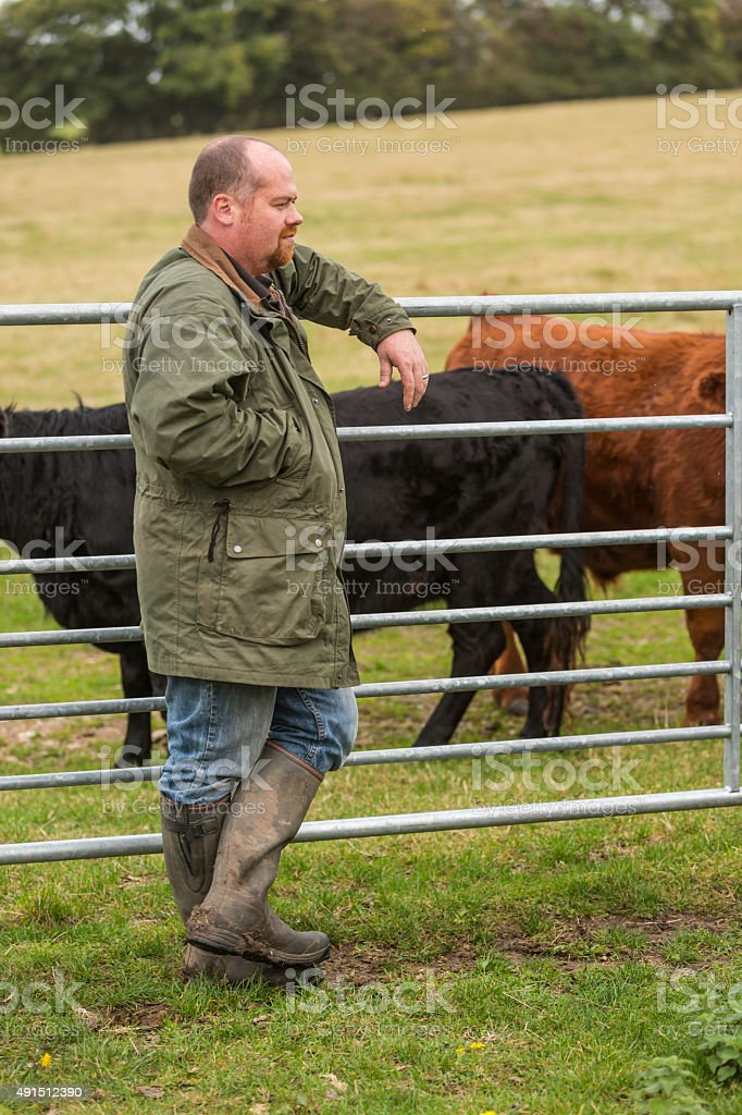 Cattle Farmer With Cows while Causally Leaning on a Gate stock photo