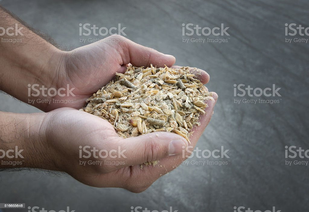 Cattle feed inhuman hands stock photo