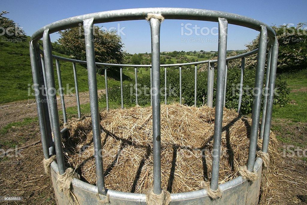 Cattle feeder stock photo