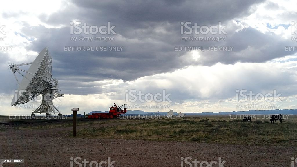 Cattle Grazing Beside Very Large Array stock photo