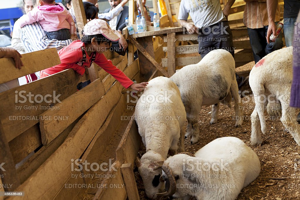 Cattle market in istanbul stock photo
