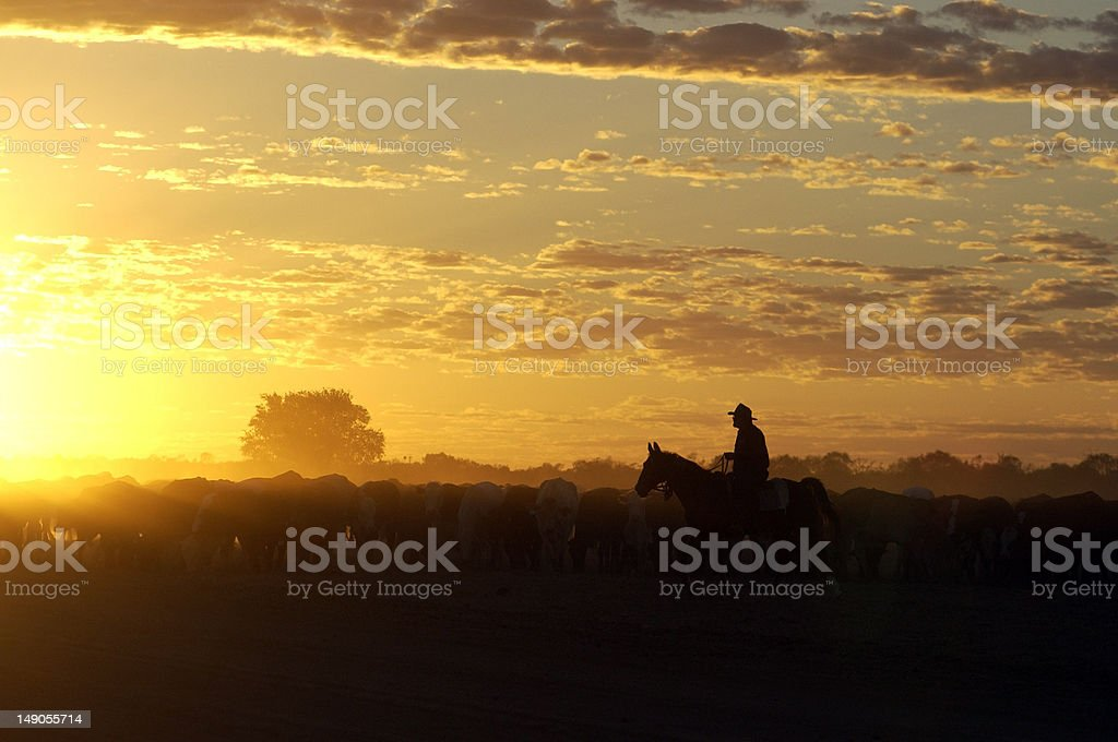 cattle muster at Birdsville ,Queensland stock photo