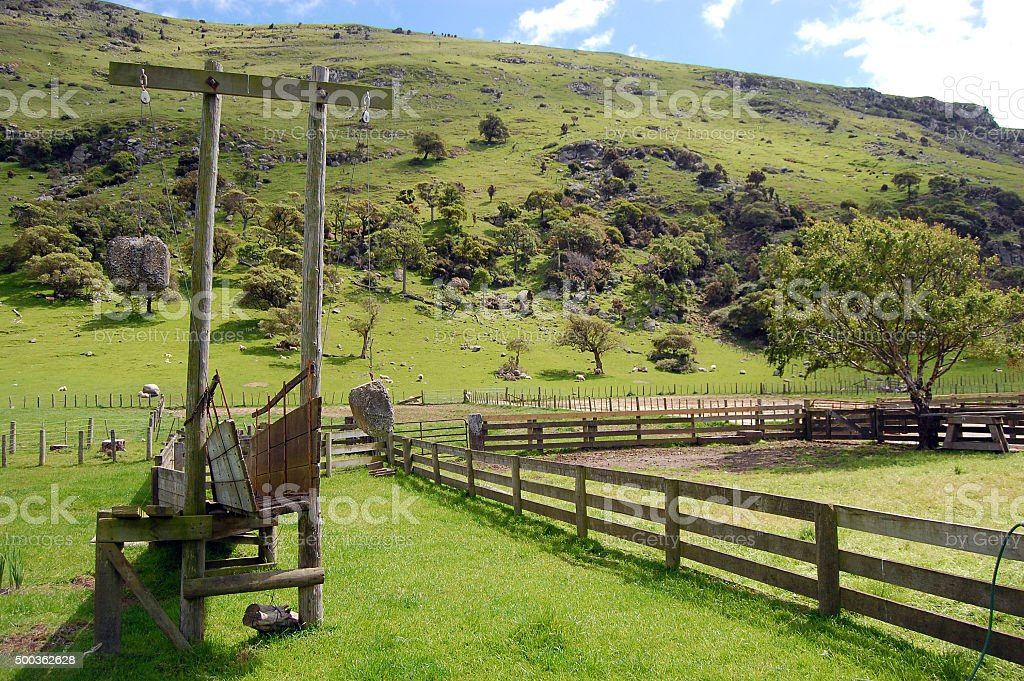 Cattle pen new zealand stock photo