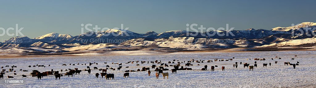 Cattle Ranch on the Great Plains in Winter royalty-free stock photo