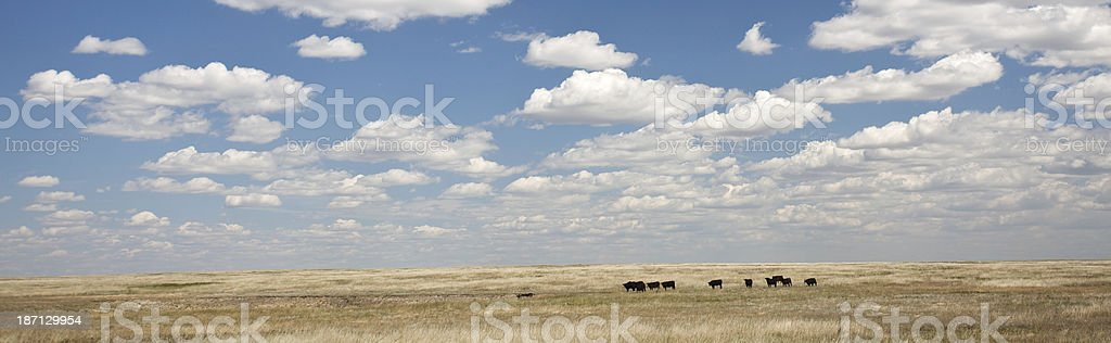 Cattle Ranch royalty-free stock photo