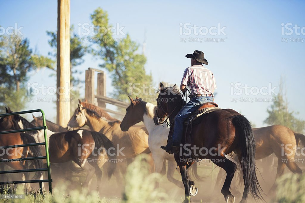 Cattle rancher driving horses into corral royalty-free stock photo