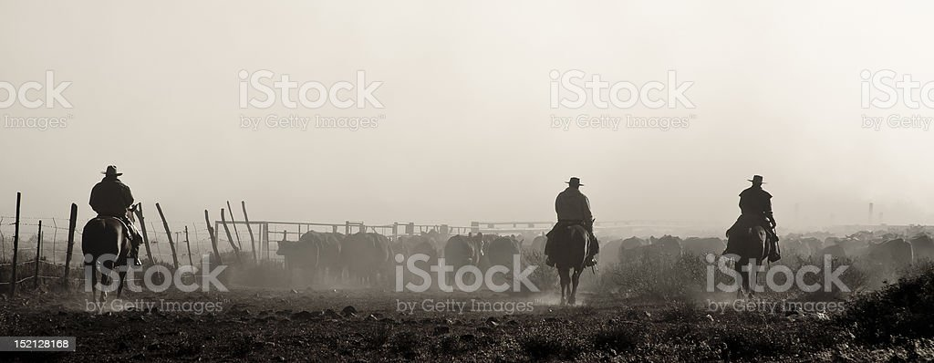 Cattle Round Up stock photo