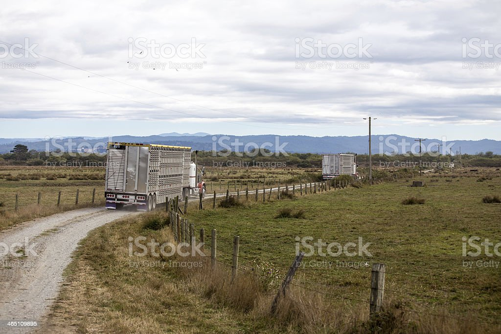 Cattle trucks leaving the ranch stock photo