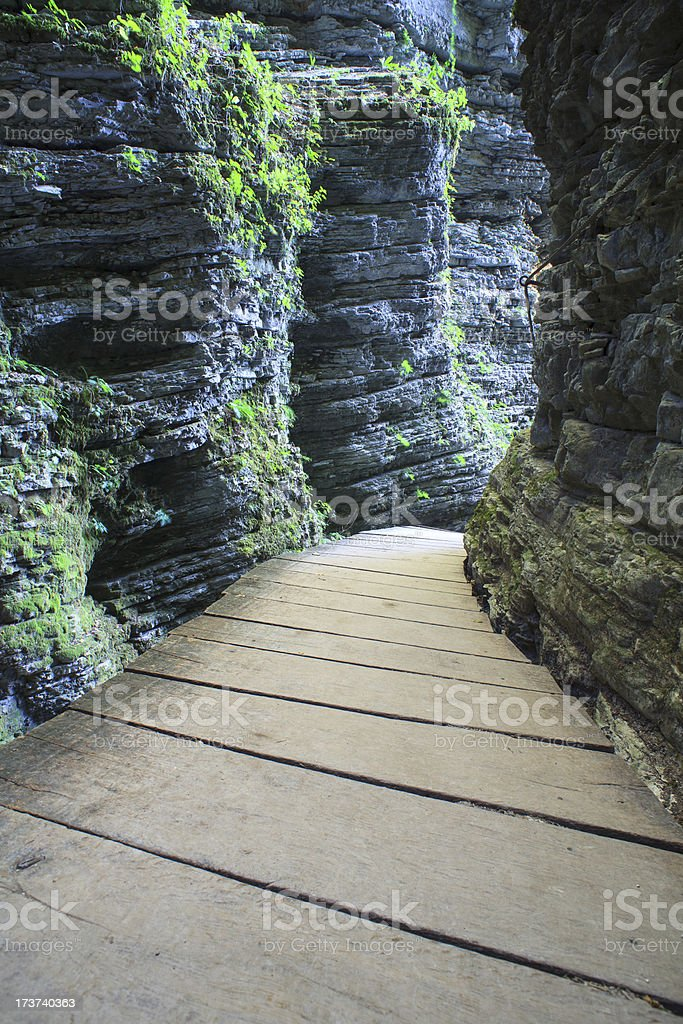 Catwalk in the forest royalty-free stock photo
