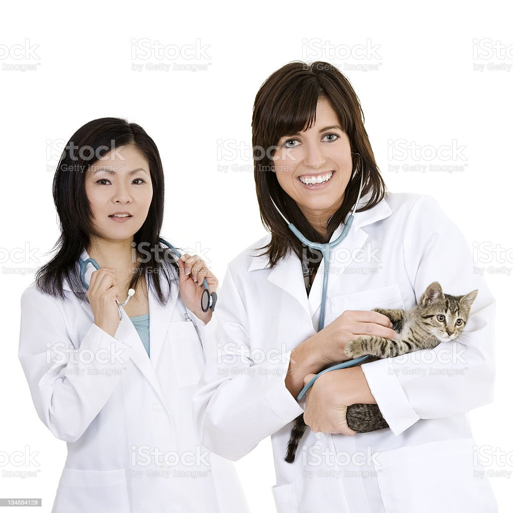 Caucasian and Asian woman Veterinarians holding and examining a kitten royalty-free stock photo