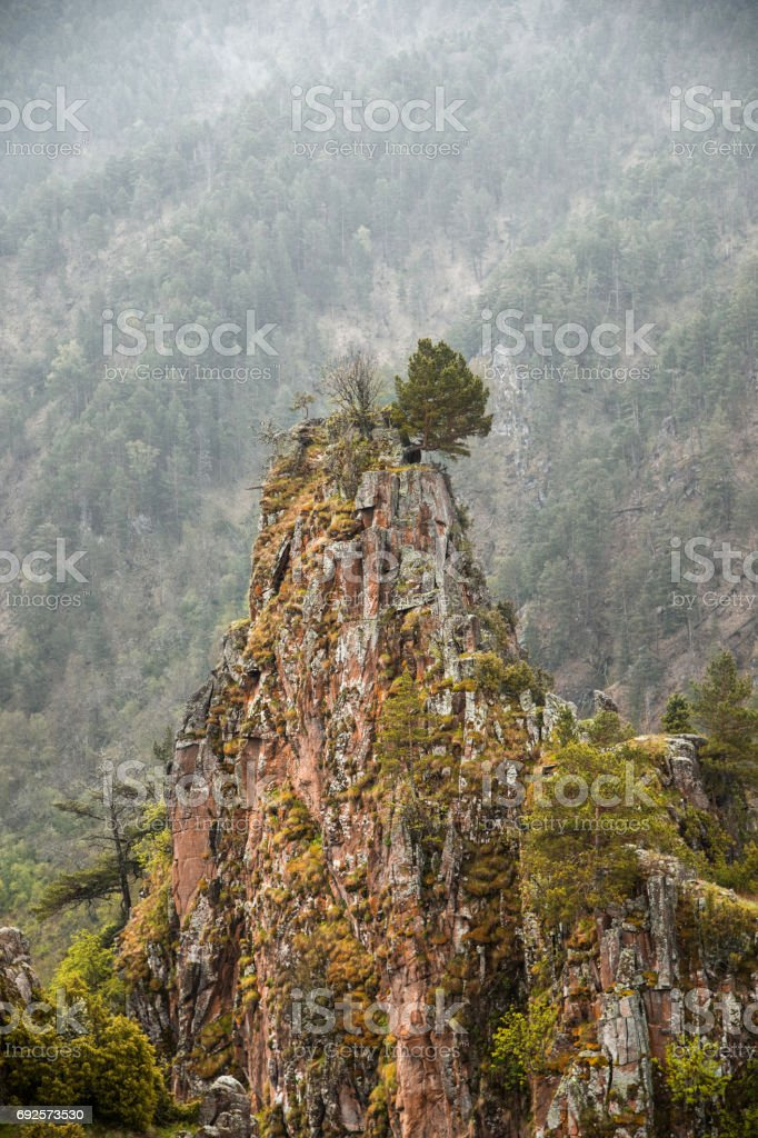 Caucasian beauty in the mountains where Juniper and conifers on the background of sharp foggy forest stock photo