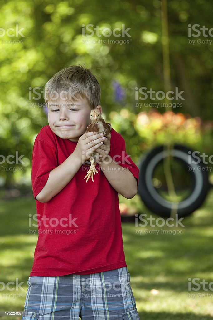 Caucasian boy holds Bantam chick in country, vertical shot stock photo