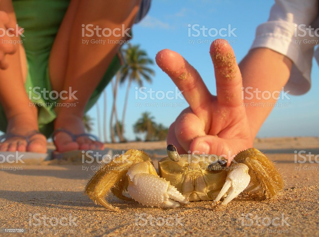 Caucasian Children Playing With Crab on the Beach royalty-free stock photo