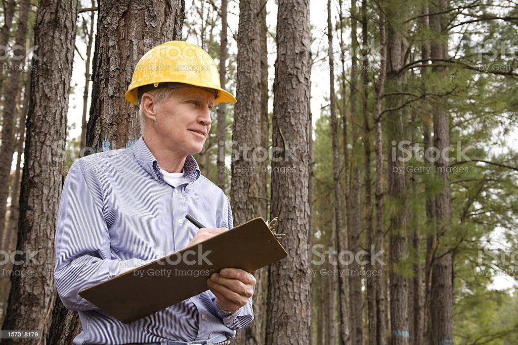 Caucasian man, hardhat. Forester, builder. Studying environmental conservation burned forest. stock photo
