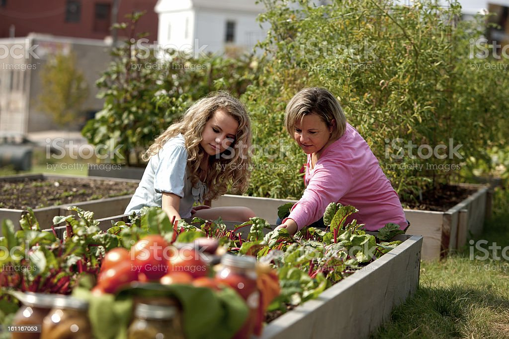 Caucasian mother and daughter picking vegetables in garden stock photo