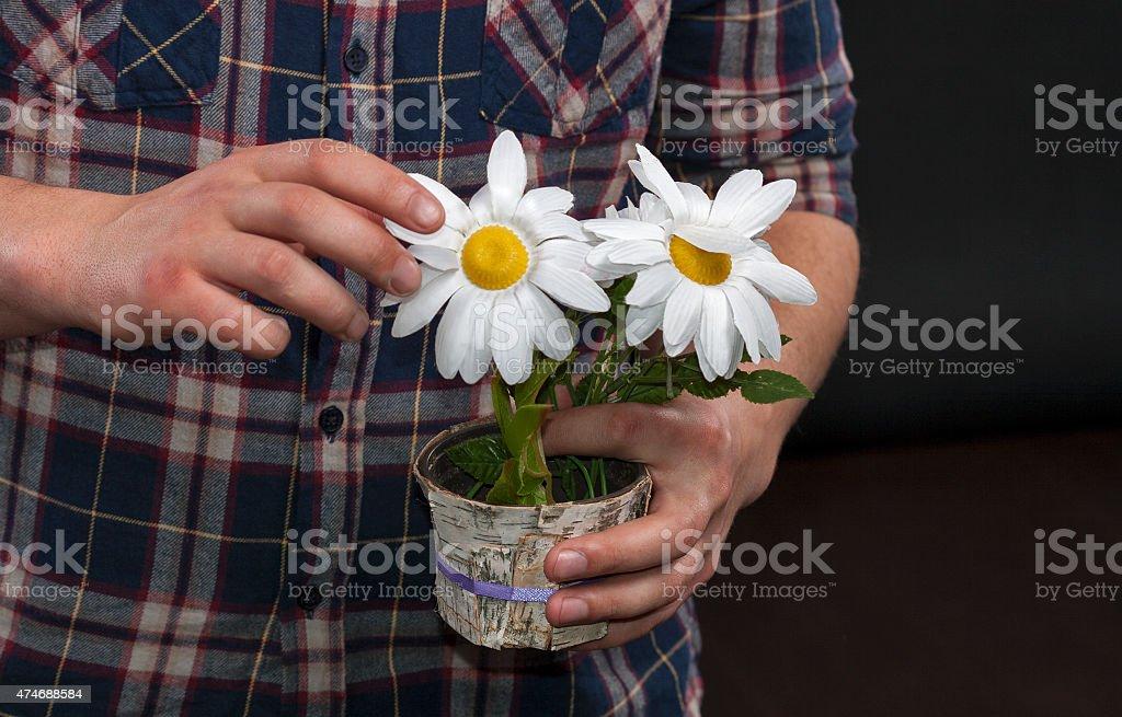 Caucasian unrecognizable male hands holding a pot with artificia stock photo