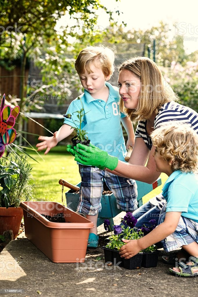 Caucasian Woman And Little Boys Gardening Together royalty-free stock photo