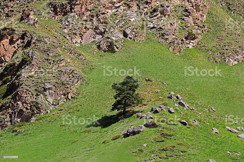 Caucasus green mountain and tree stock photo